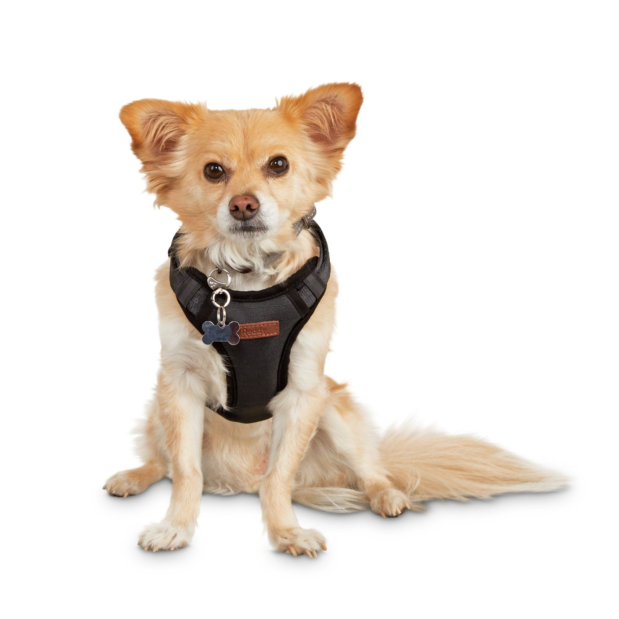 Reddy Road Trip Dog Harness Small In 2020 Dog Harness Dogs