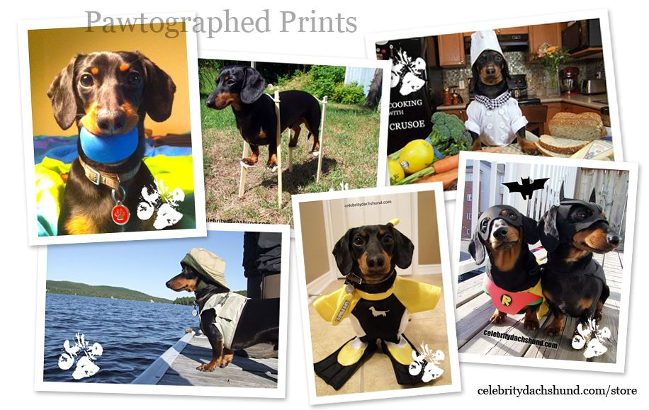 Crusoe Store Now Featuring Pawtographed Prints Crusoe The