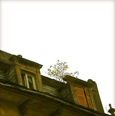 io ero un albergo (adesso un albero cresce su di me)