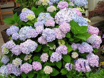 Partial Shade Plants Zone 5 | First Home Dreams: Zone 5 Perennials For  Partial Sun