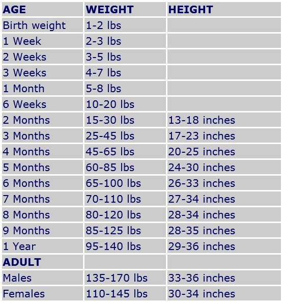 Great dane growth chart toll  tt pepsi pinterest charts and dog also rh