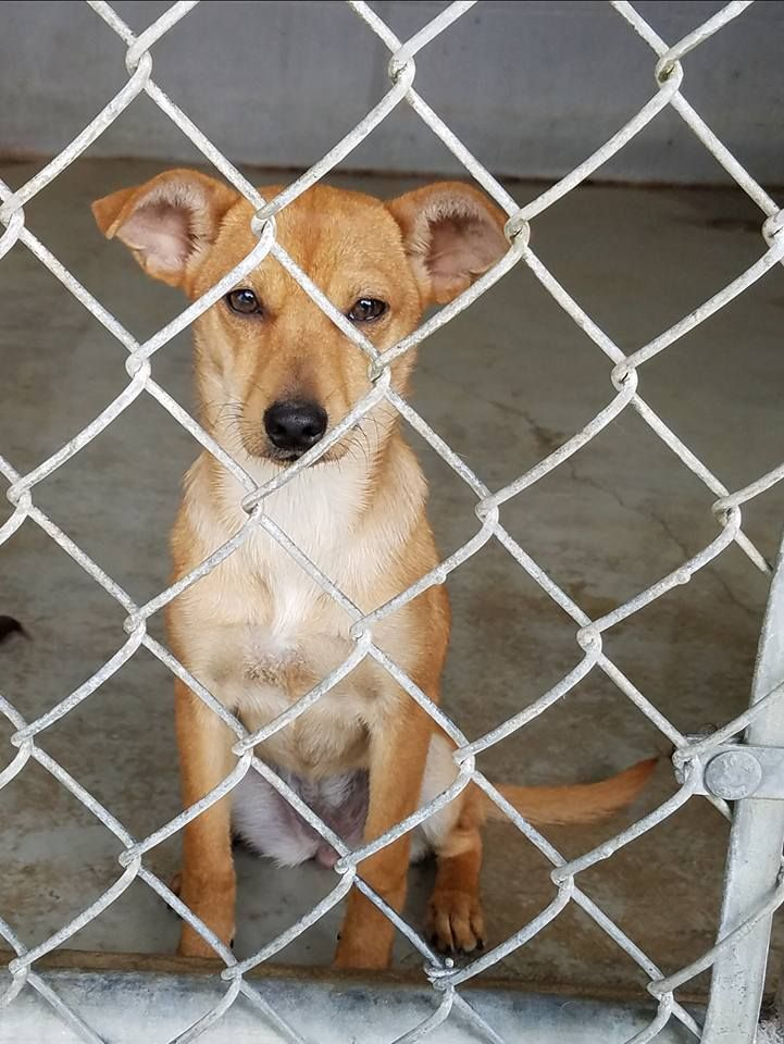 Just a puppy in Laredo, TX, kill shelter. Please clik on