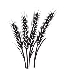 Wheat vector plant grain icon illustration Wheat field harvest design agriculture