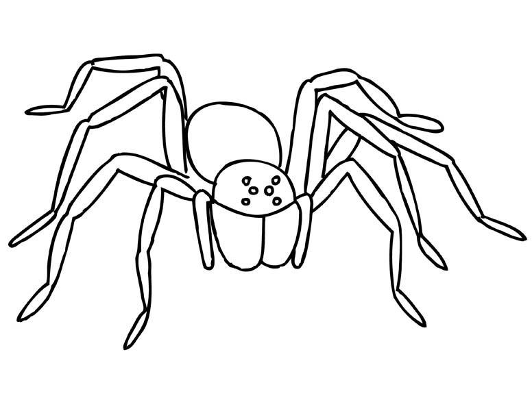Creepy Tarantula Spider Coloring Page Color Luna Spider Coloring Page Coloring Pages Creepy