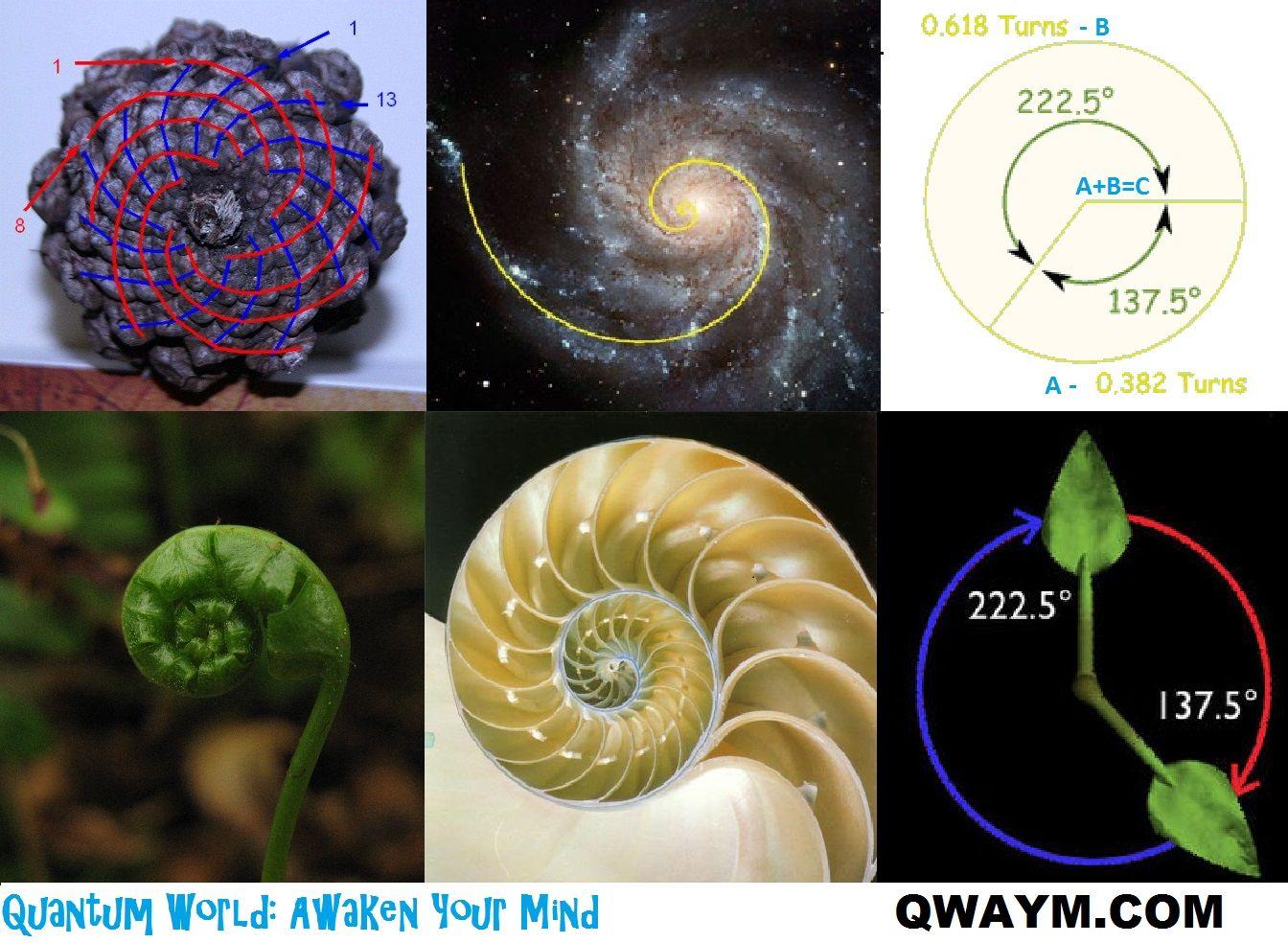Goldenratio1 Golden Ratio Fibonacci In Nature Sacred Geometry