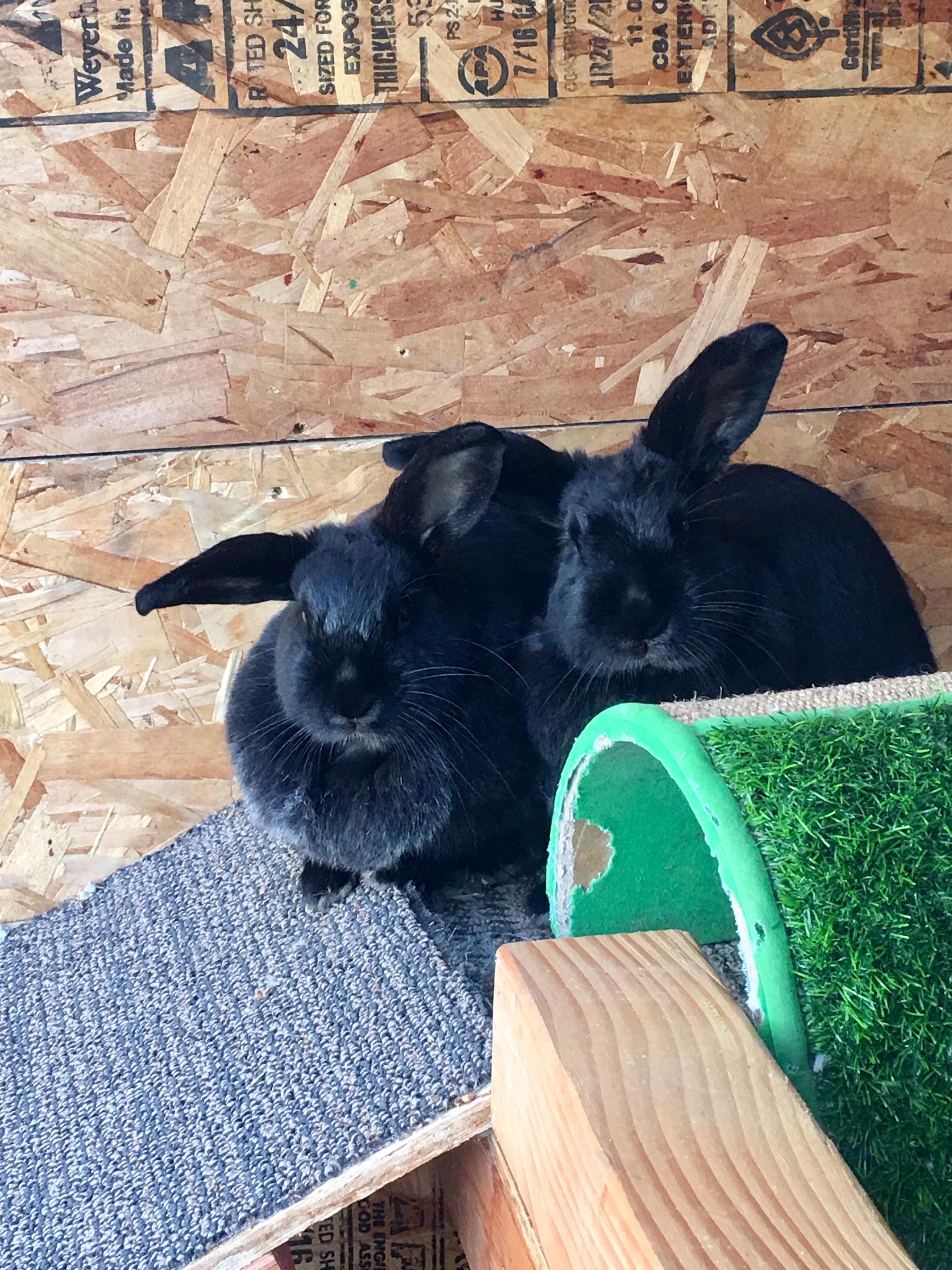 Things You Need To Know Before Buying A Rabbit Buy a