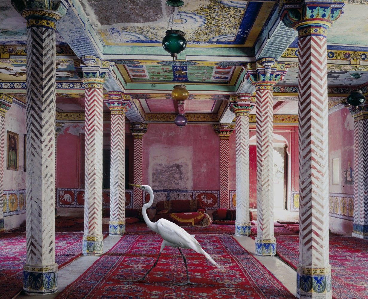 Fauna with stylish habitats... by Karen Knorr.  See more here (or clock the image): http://www.justfollowthewhiterabbit.com