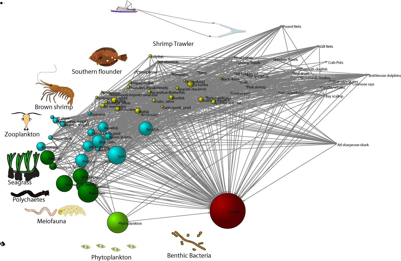 Core Sound Food Web Food chain diagram, Food chain, Diagram
