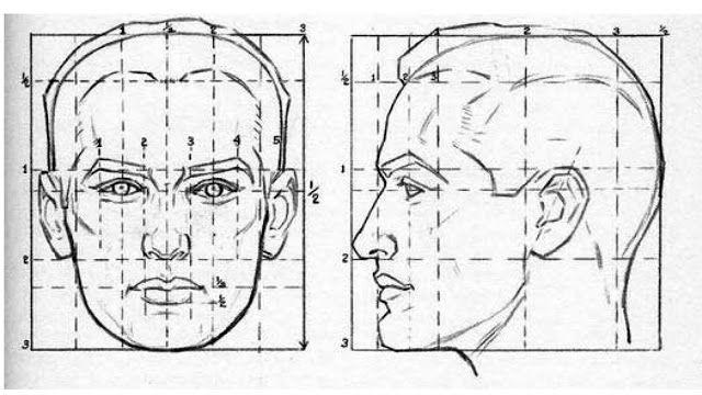 Proporcion Del Rostro El Retrato Como Dibujar Retratos Aprender A Dibujar Rostros Dibujar Rostros