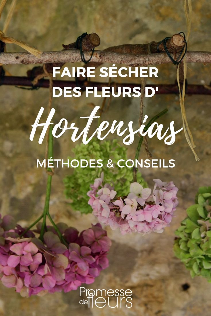 comment faire s cher les fleurs d 39 hortensia tutoriel reciclar pinterest garden flowers. Black Bedroom Furniture Sets. Home Design Ideas