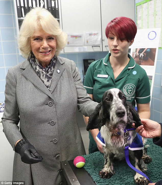 Camilla Is Named Royal Patron Of Battersea Dogs Cats Home Battersea Dogs Cat House Dog Cat