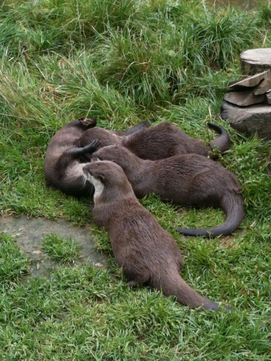 Tamar Otter & Wildlife Centre in Launceston, Cornwall, England