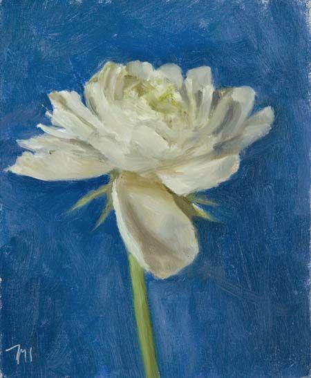 Blanc Rununculus sur fond bleu par Julian Merrow-Smith