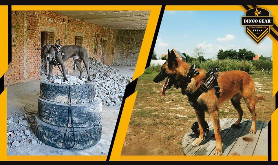 Szelki dla psa z taśmy do pracy, czarne Working dogs