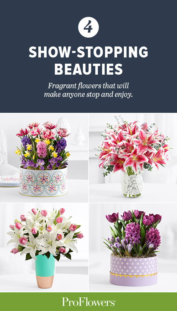 Adding a sweet scented flower like these lilies, stargazers and orientals can bring a great aroma to any space. Find these and more fragrant blooms for your spring gifting here.