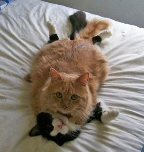 Cats caught in the act!