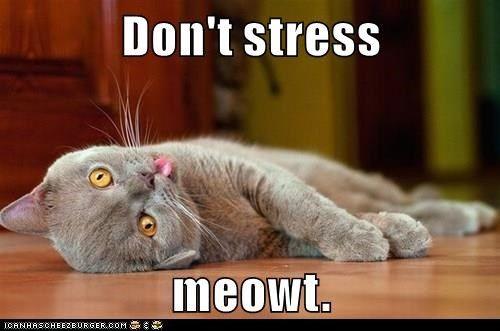 Meme Don T Stress Funny : Don't stress meowt. things i like pinterest kittens meowing