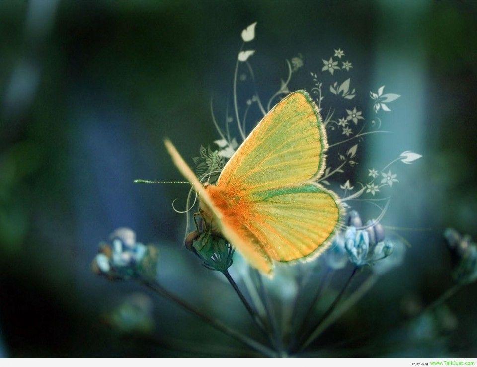 3d Butterfly Wallpaper 3d Butterflies Desktop Hd Wallpapers 3d