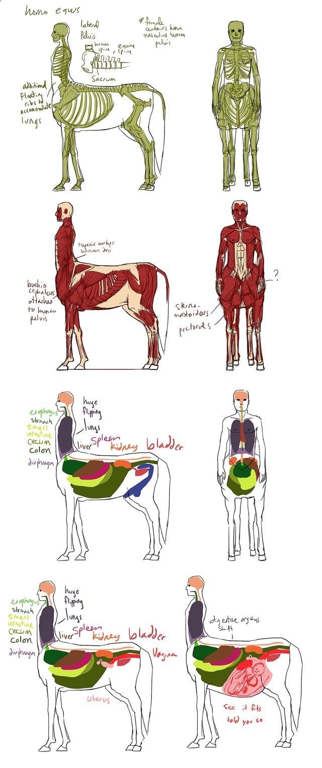 Centar anatomy. The see it fits, told you so craps me up. | bases ...