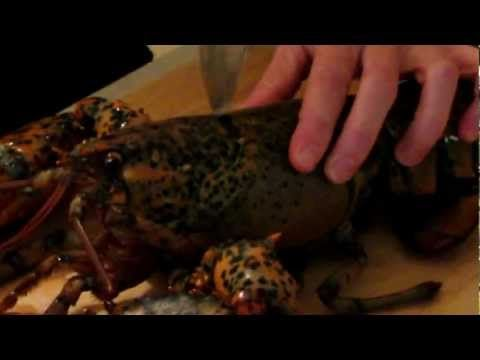 How to Kill a Lobster...Humanely - YouTube