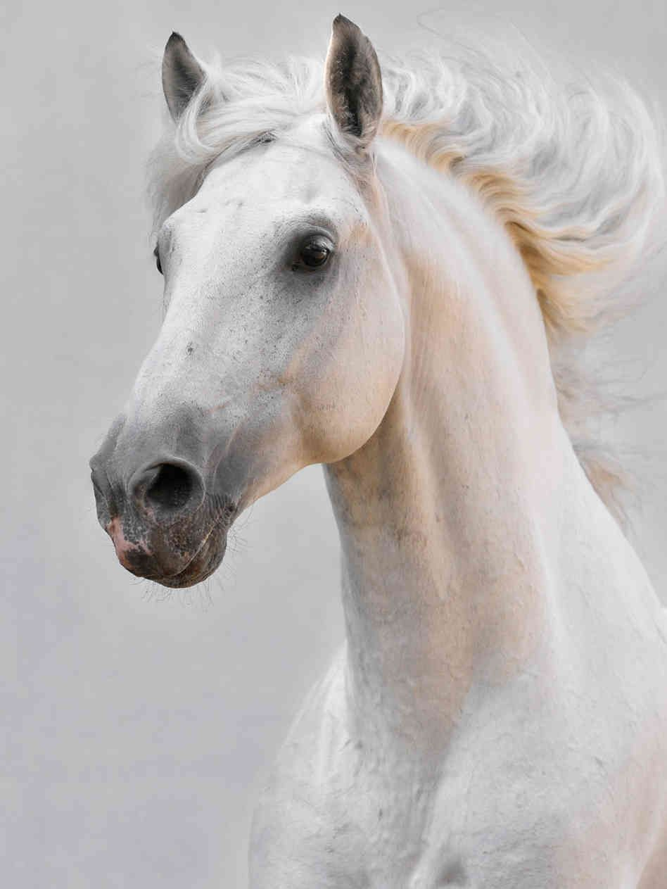 Horse face photos makarova viktoria via istockphoto com