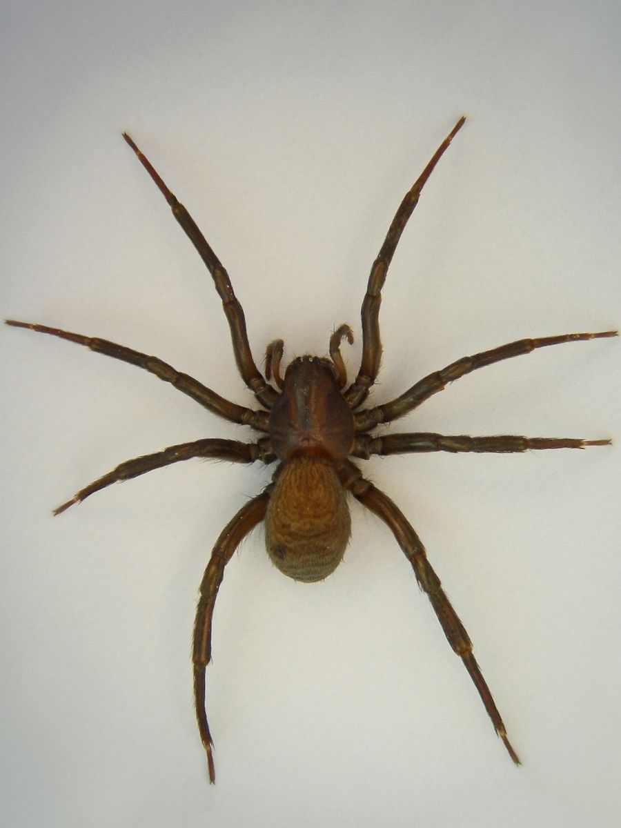 Some Of The World S Most Venomous And Dangerous Spiders Spider Dangerous Spiders Spiders And Snakes