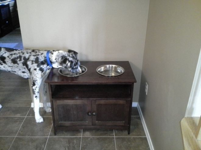 Great Dane Patient And Friendly Diy Dog Stuff Great Dane
