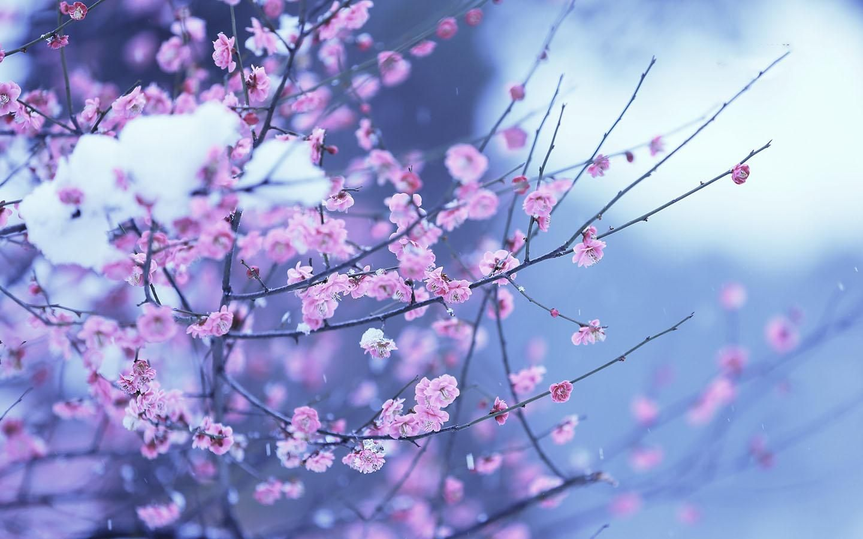 Okean Prosvetlenie Kaplya Sliyanie Baixar Flowers Hd Wallpaper Para Android Por Melbourne Spring Flowers Wallpaper Flower Background Wallpaper Flower Backgrounds