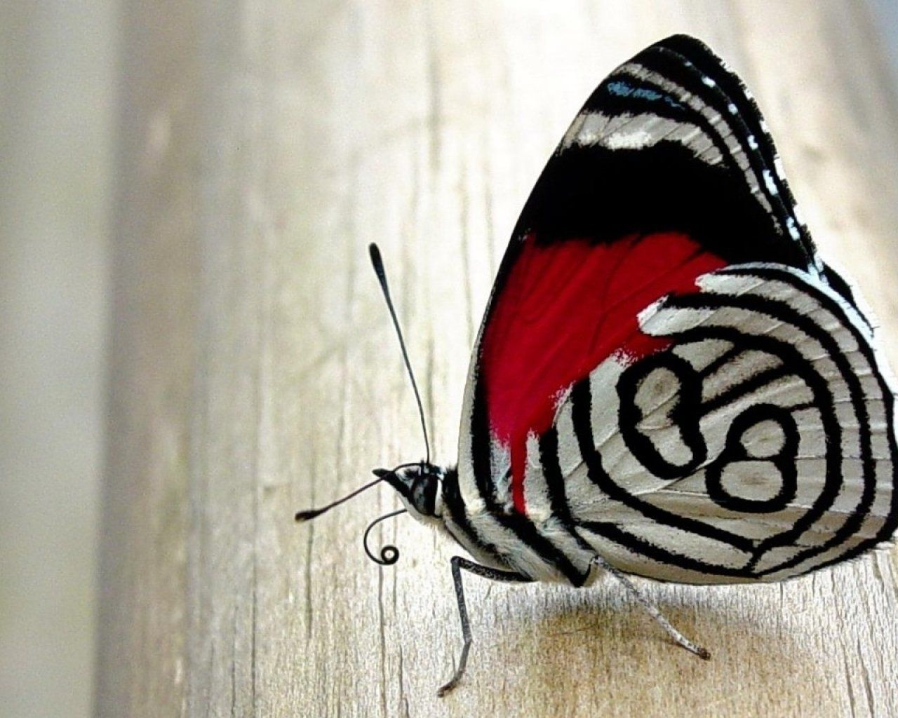 Photo of black&red butterfly