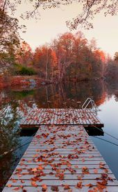 Photo of autumn discovered by Blue cat on We Heart It  Image uploaded by Blue cat. Find i…