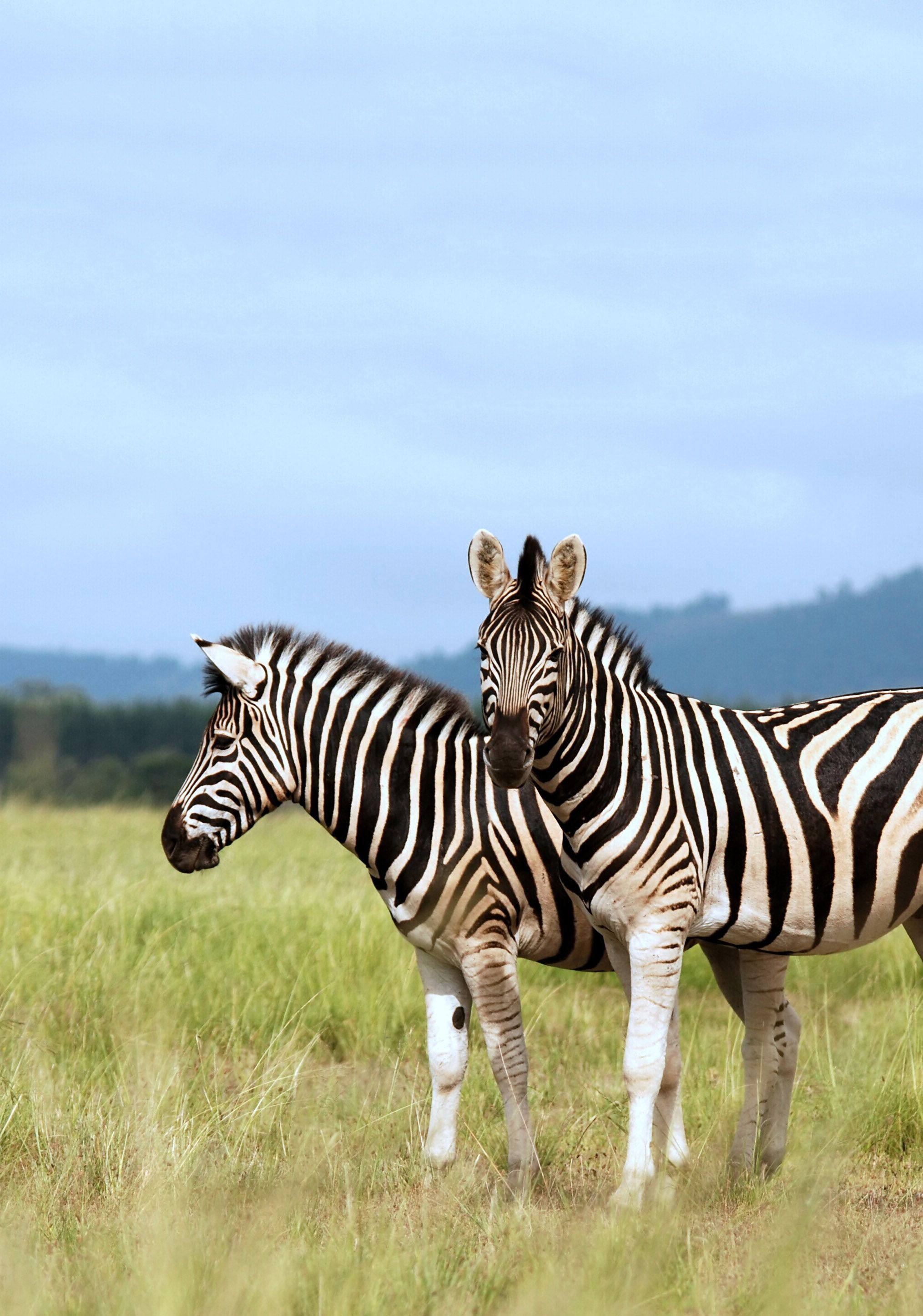 African Travel Specialists   Africa   Africa travel, African safari