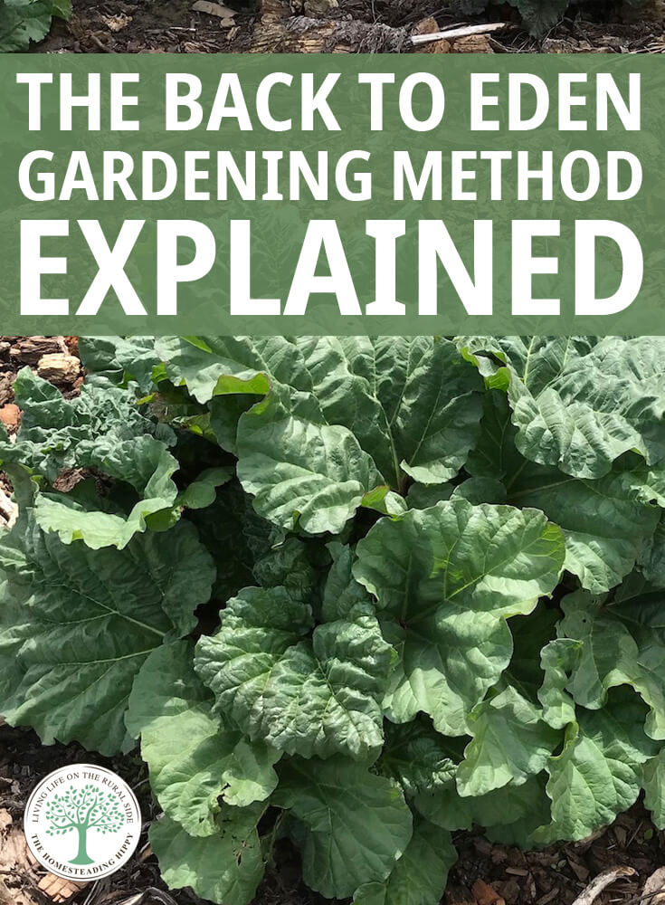 Back to eden gardening is a more natural way to garde, with less watering, weeding and tilling. We show you how easy it is to get started. #gardening