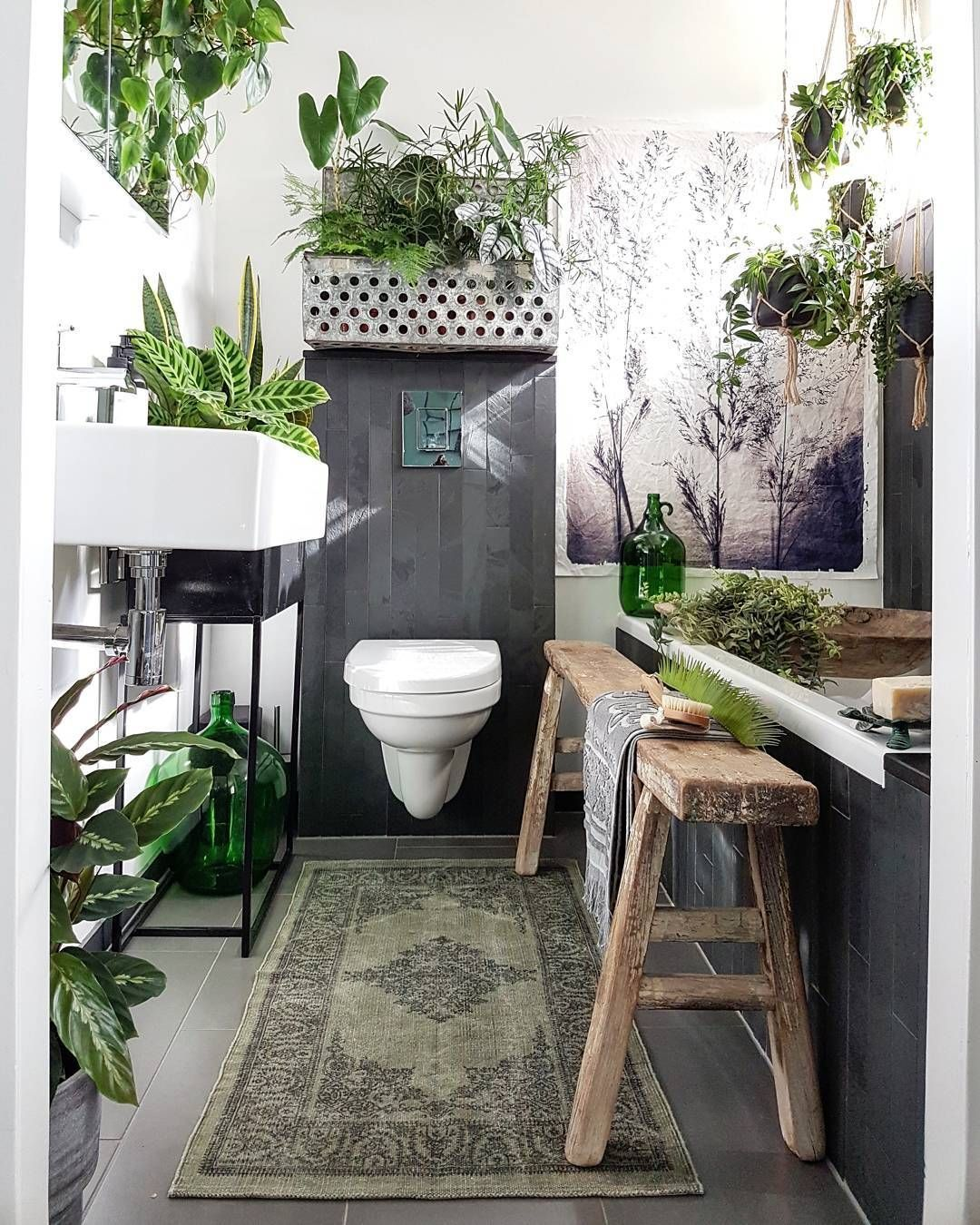 Hey Everyone These Bathroom Are Perfect For The Bathroom Plants Windowless Bathroom Plants Lo Bathroom Plants Bathroom Plants Decor Bathroom Plants Low Light