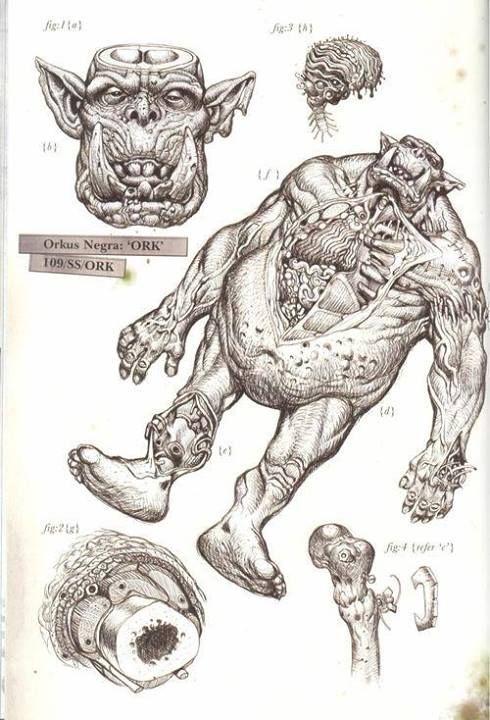 Ork anatomy | Warhammer 40k | Pinterest | Warhammer 40K, Anatomy and ...
