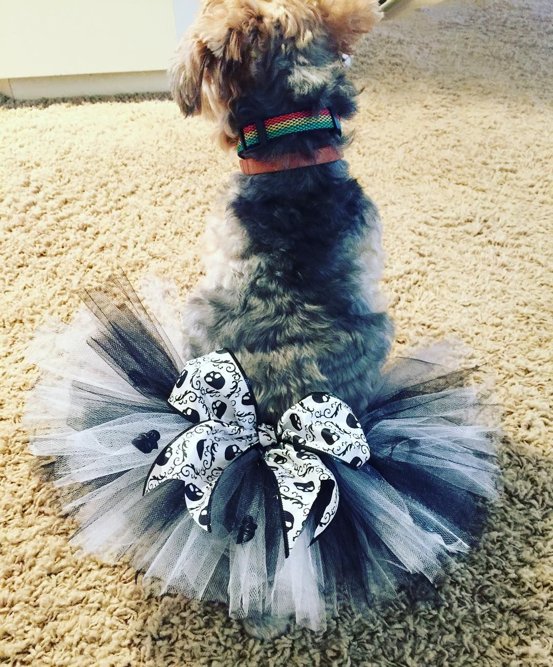 """""""❤️ Coco can't wait to sport this on our morning walk!! Skeleton tutu $11.95!! Check out our shop! Link in profile! #dog #dogs #dogsofinstagram…"""""""