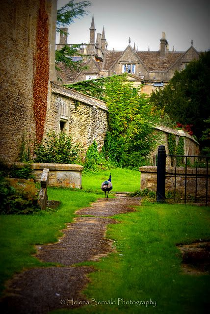 from the cemetery in Corsham (The manor Corsham Court in the background behind the wall).  UK
