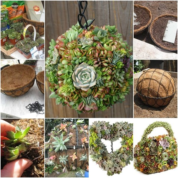Delightful DIY Hanging Succulent Ball Projects For A Gorgeous Addition To Your Garden.  You Can Change To Succulent Heart, Handbag With This Technique.