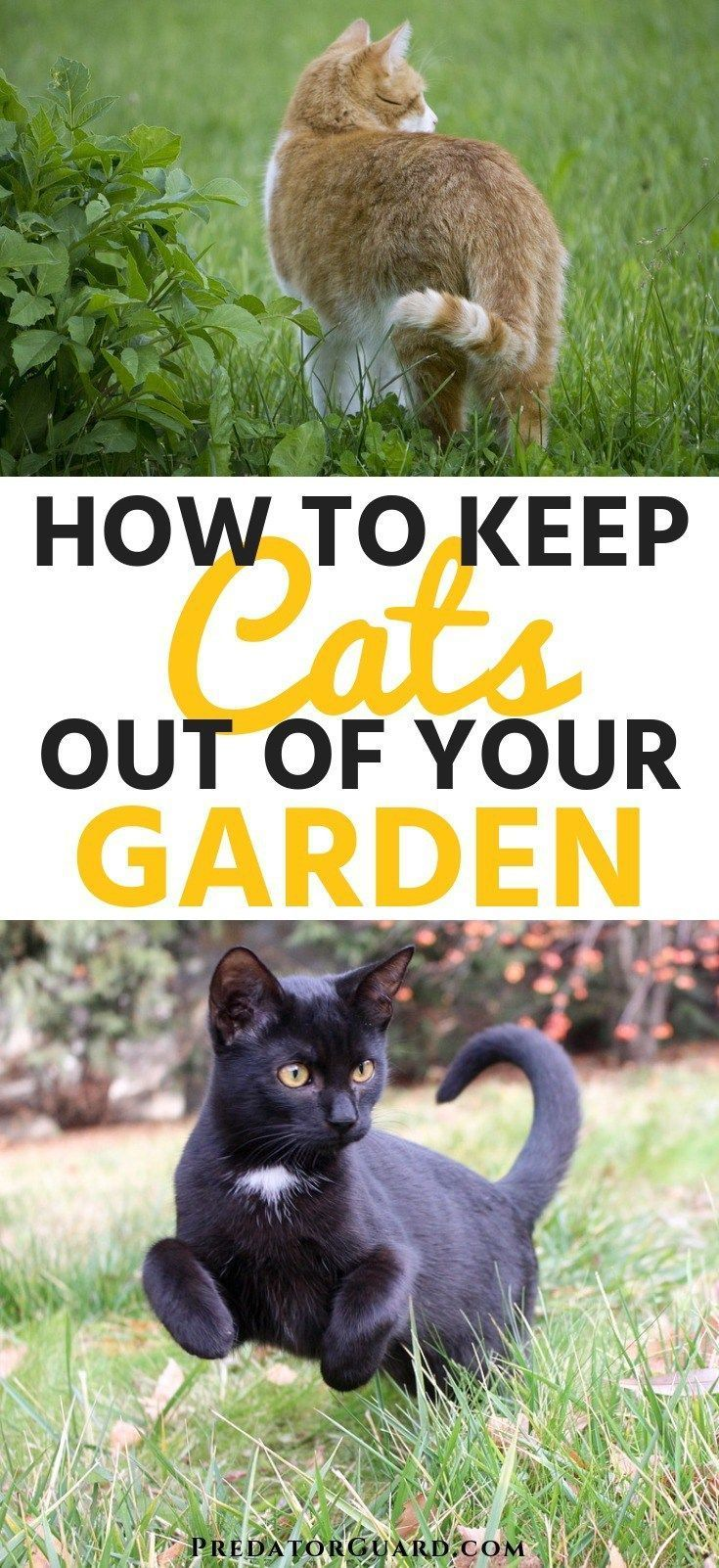 How To Keep Cats Out of Your Garden is part of Cat repellant garden, Cat garden, Garden animals, Backyard garden diy, Cat repellant outdoor, Quick garden - Learn how to keep cats out of your garden to protect your plants and yourself! As cute as cats are, allowing them to run free in your garden isn't always