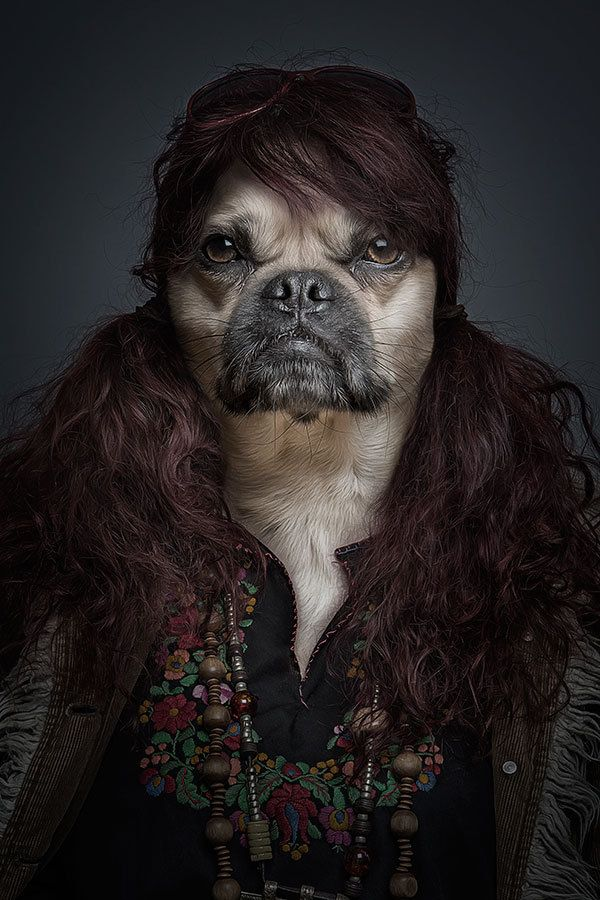 Funny Portraits Of Dogs Dressed Like Humans Dog Portraits Pet