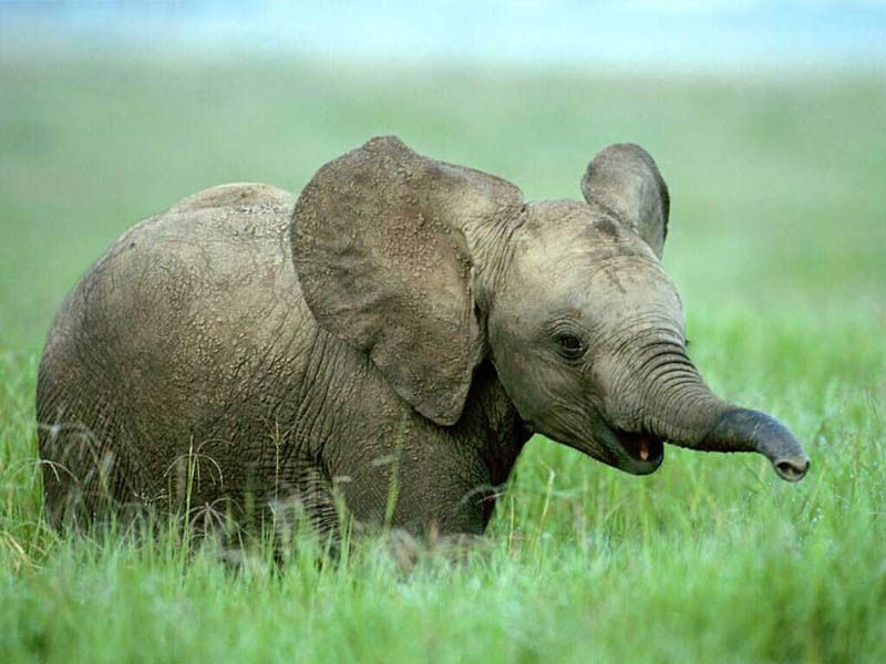 The 35 Cutest Baby Elephants You Will See Today Cute Elephant Pictures Baby Elephant Pictures Animals