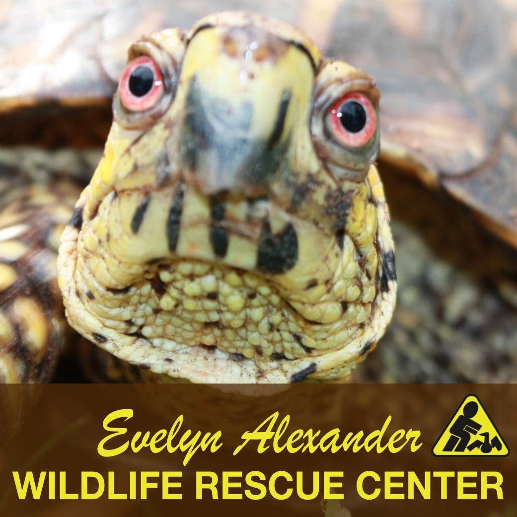Wildlife Rescue Center Of The Hamptons Mammals Rescue