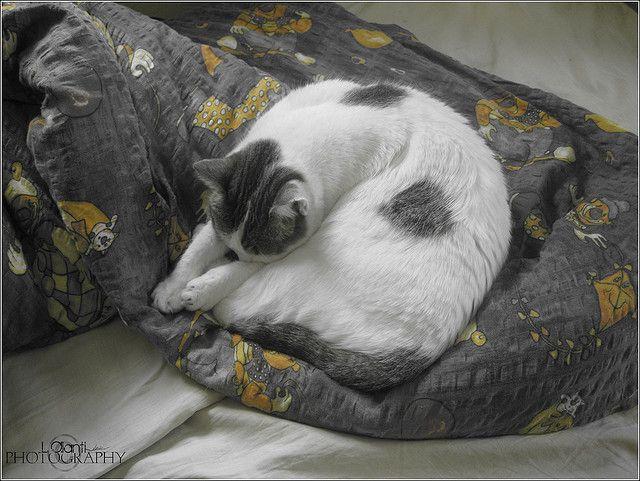Cat by lastminute.com, via Flickr