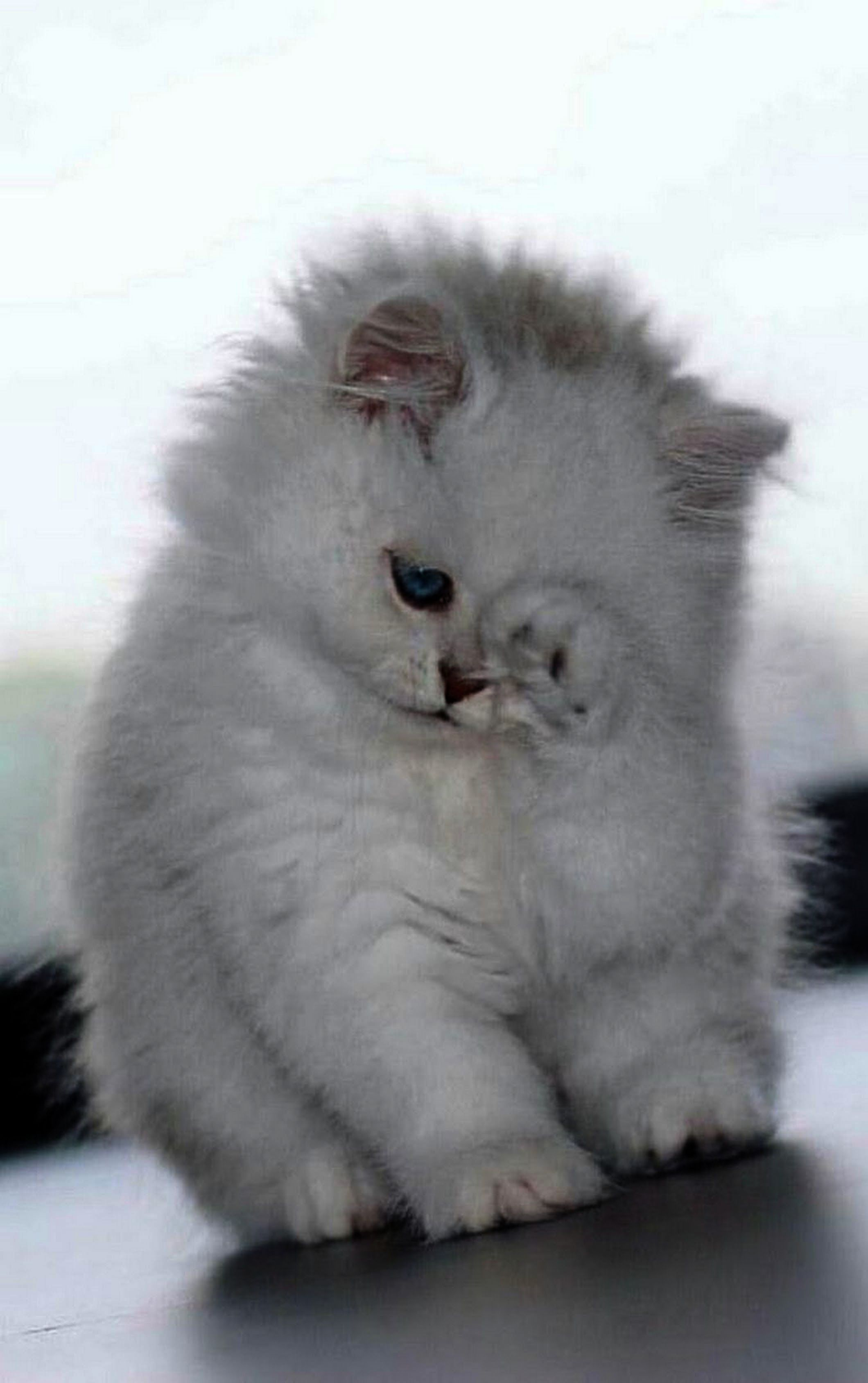 Just Keep Swimming Just Keep Swimming Kittens Cutest Cute Cats Cute Baby Animals