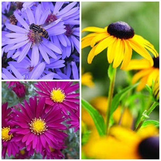 10 Perennial Examples For Your Garden Perennials Perennial Plants Flowers Perennials