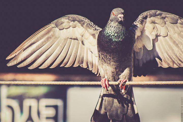 #photo #pic #picture #snapshot #color #all_shots #exposure #composition #focus #capture #moment #yazan_karkouti #canon #600d #turkey #istanbul #dove #birde http://ift.tt/2ckzA7O https://twitter.com/YazanKarkouti http://ift.tt/2aLtigo http://ift.tt/29Ezs1t #modyoistanbul #modyo Modyo September 10 2016 at 01:07AM