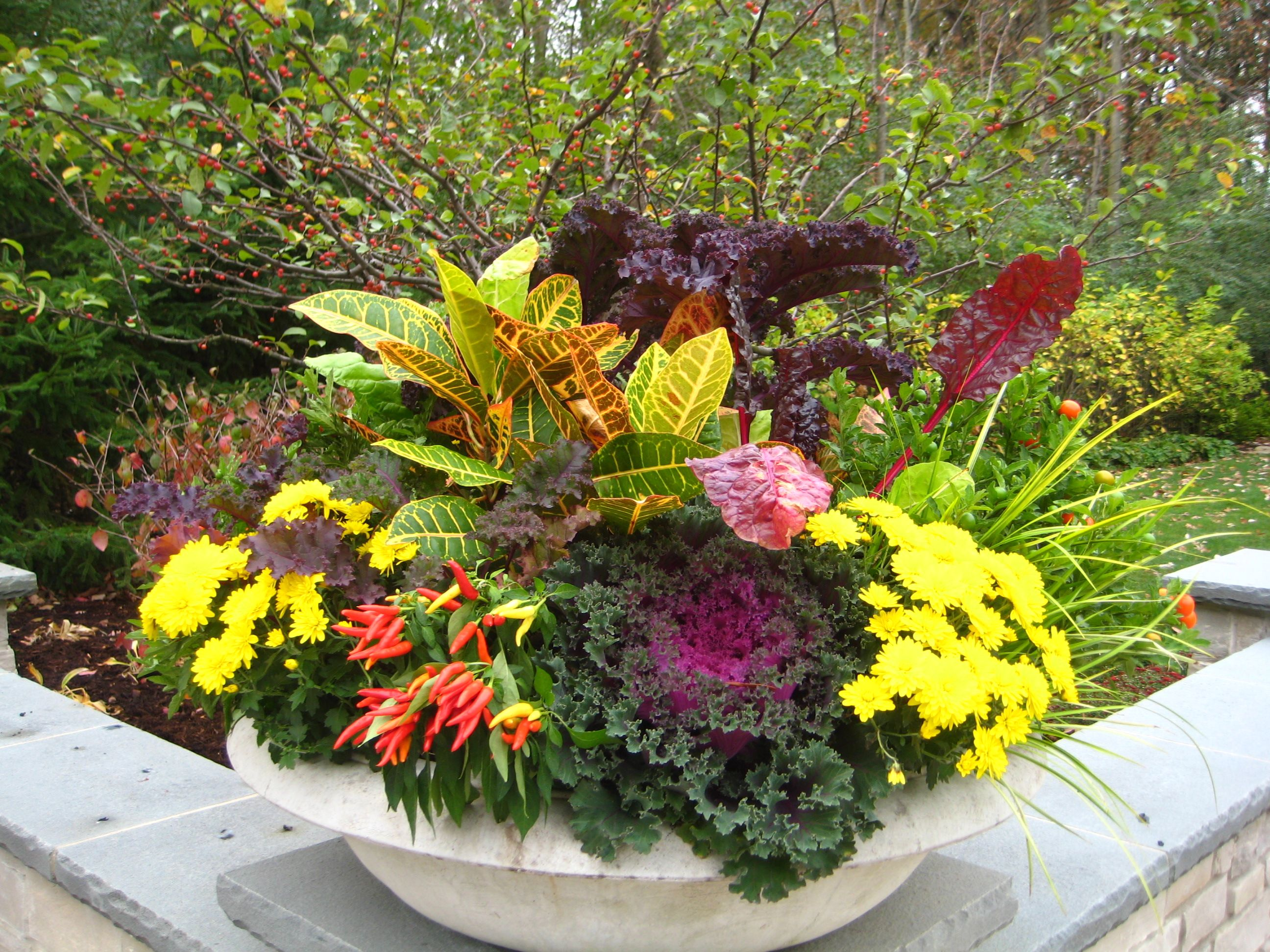 Fall container flower ideas with photos yahoo search for Outdoor decorating with potted plants