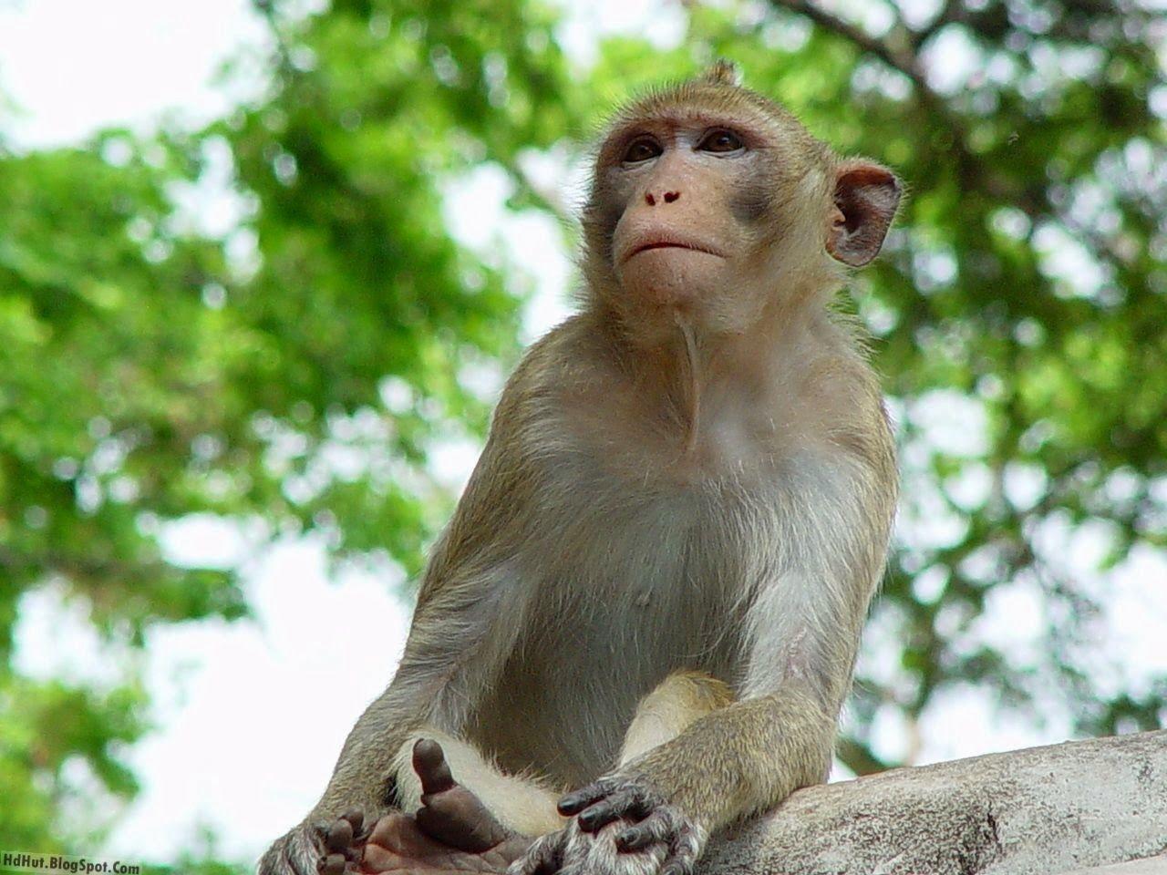 Cute Sweet Hippie Monkey IPhone Plus Wallpaper