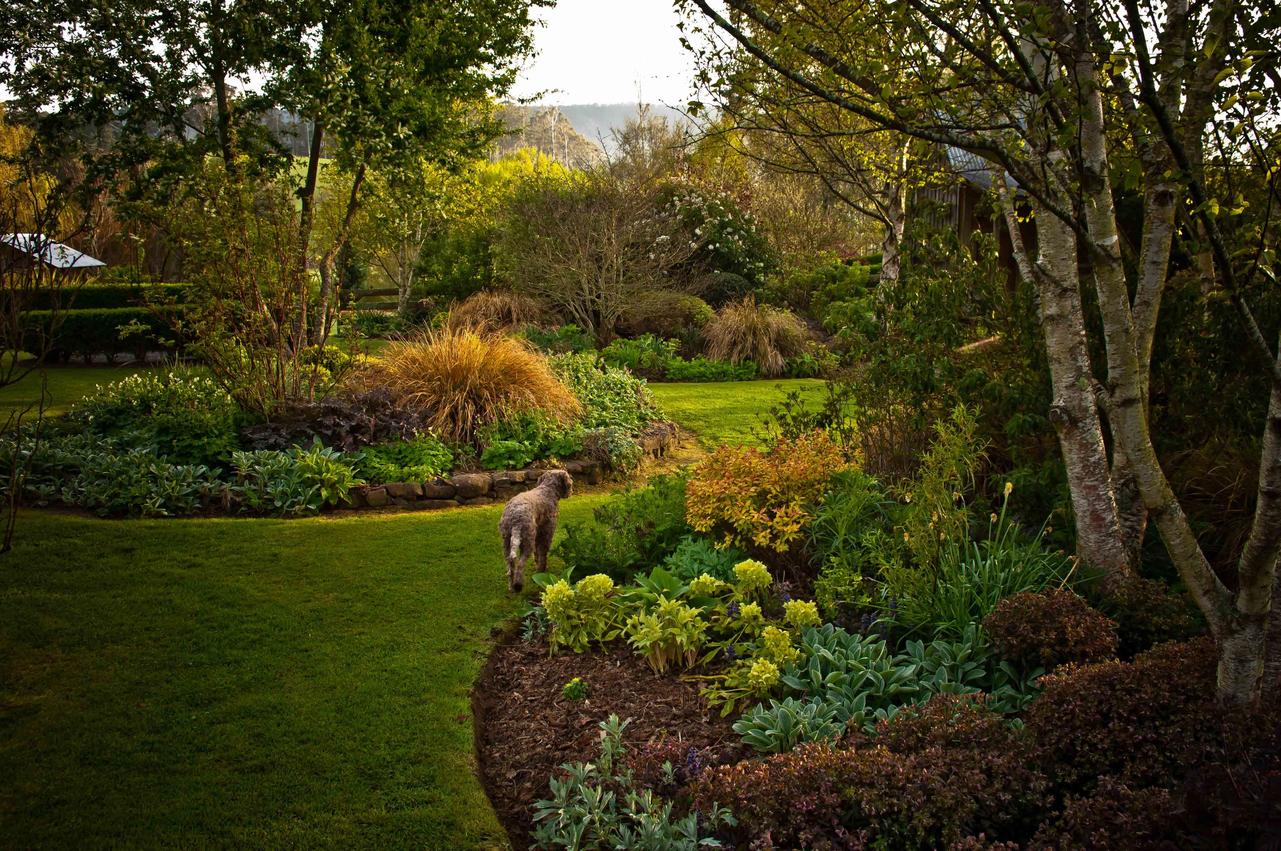 If there is any one defining feature to our garden, it would have to ...