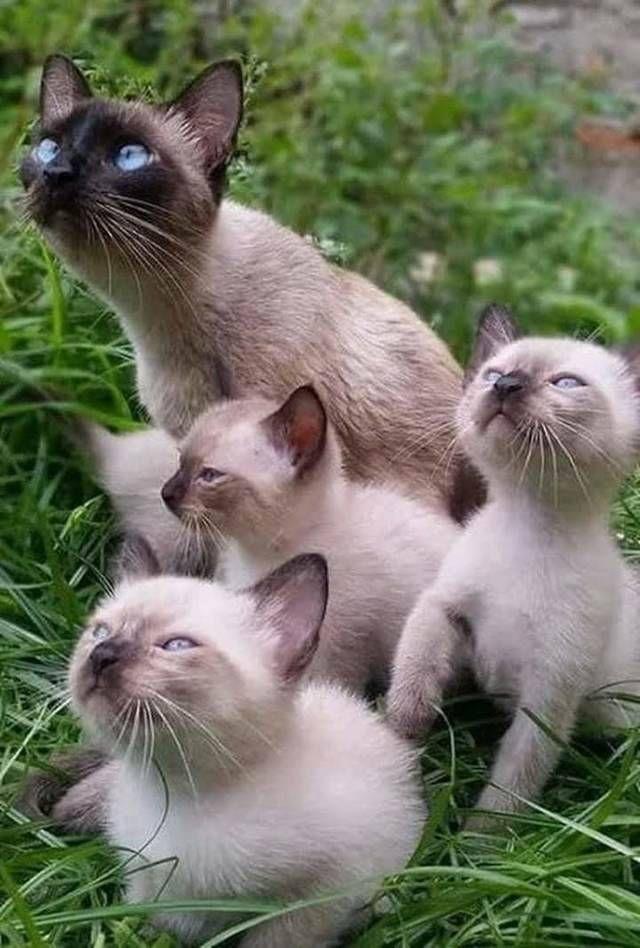 Pin Von Sonja Berner Auf Katzen Babytiere Katzen Susseste Haustiere