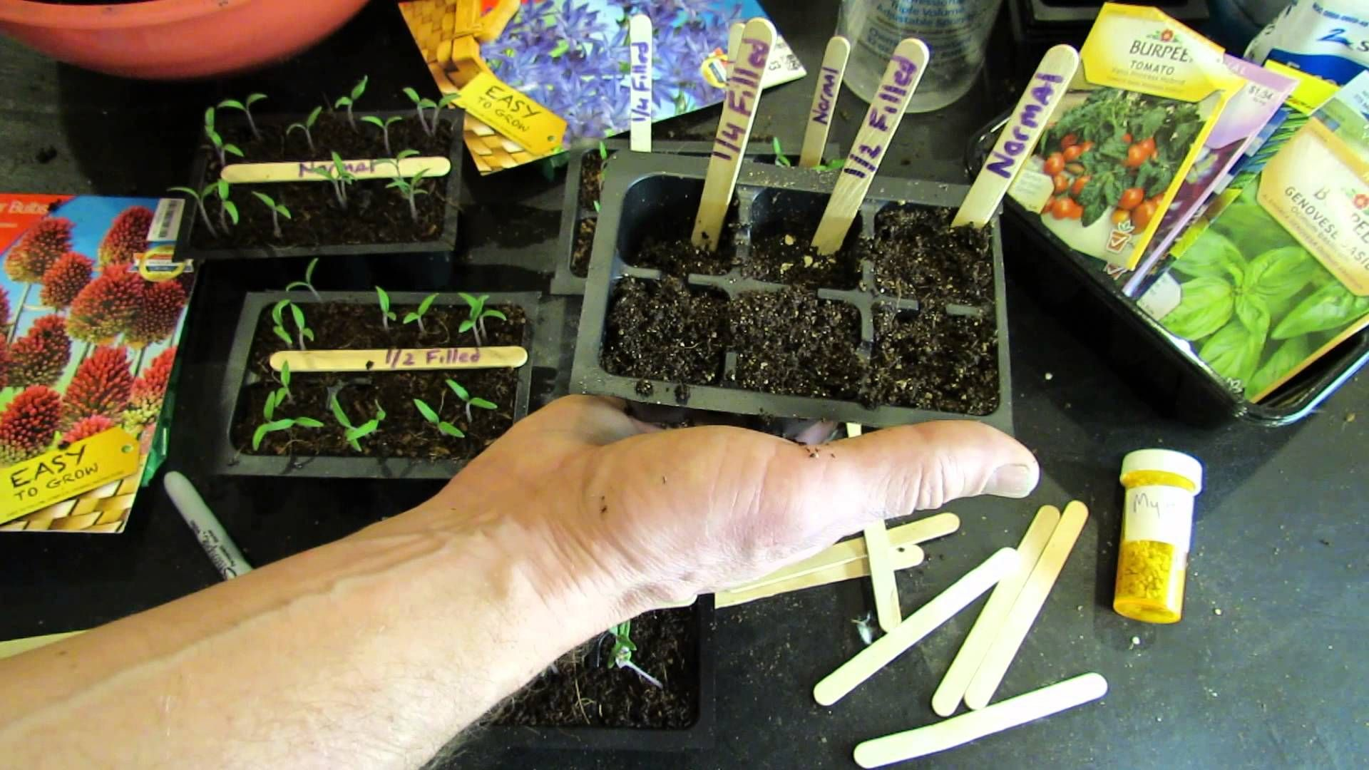 How deep to plant your tomato seeds when starting seeds